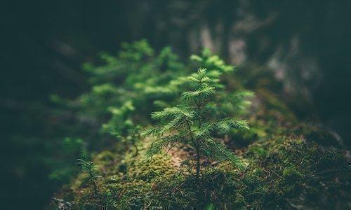 Alpin goes green