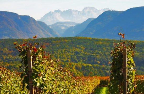 """""""Törggelen"""" – Tradizione culinaria dell'Alto Adige"""